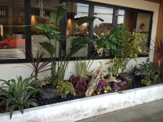 観葉植物を用いてアジアンテイストな植栽です。 ナチュラルテイストな店舗やもちろんお庭にもどうぞ!
