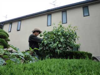 その場所、その樹に応じた剪定を心掛け、日々精進を心掛けております。